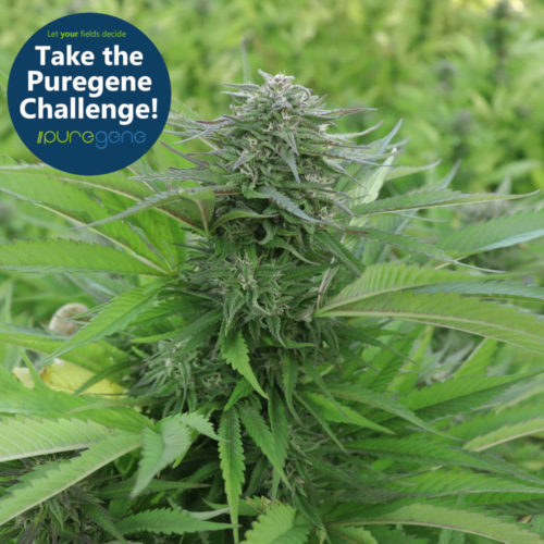 Puregene Seed Challenge Pack