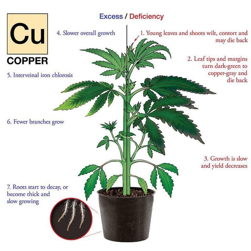 Nutrient deficiency hemp plant illustration for Copper.