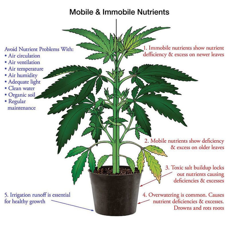 Nutrient deficiency hemp plant illustration for mobile and immobile nutrients.